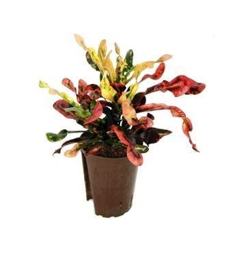 Цветы колокольчики из пластиковых